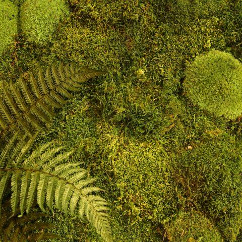 Mech roślinny